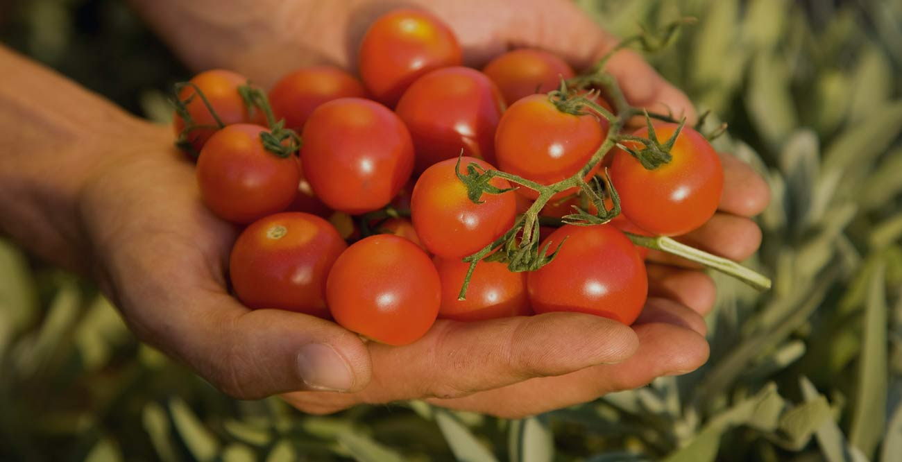 How to Convince Your Policy-Maker to Support Organic Agriculture!