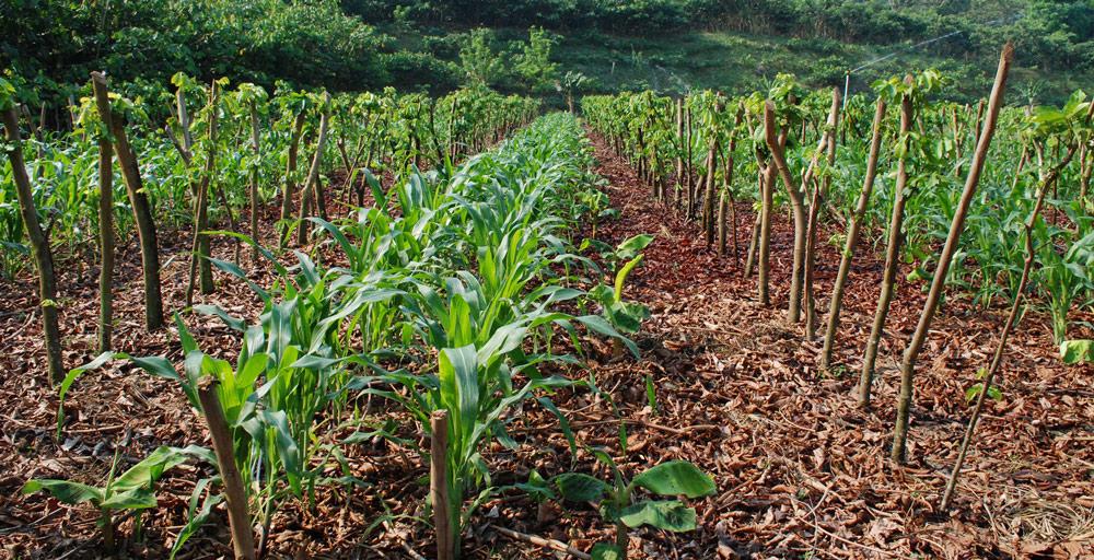 innovation-burn-agriculture