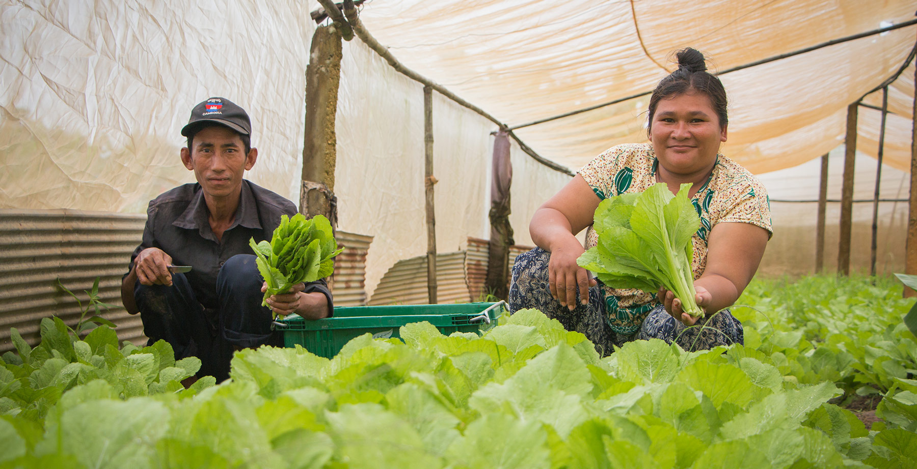 Breaking the Cycle of Chemicals and Debt: Organic Farming in Cambodia