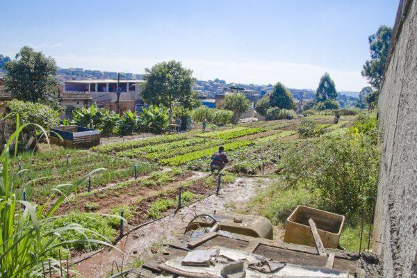 turning-urban-land-community-gardens-sao-paulo
