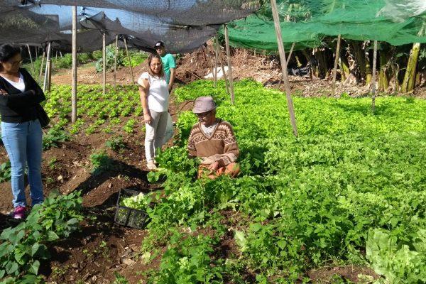 community-gardens-sao-paulo