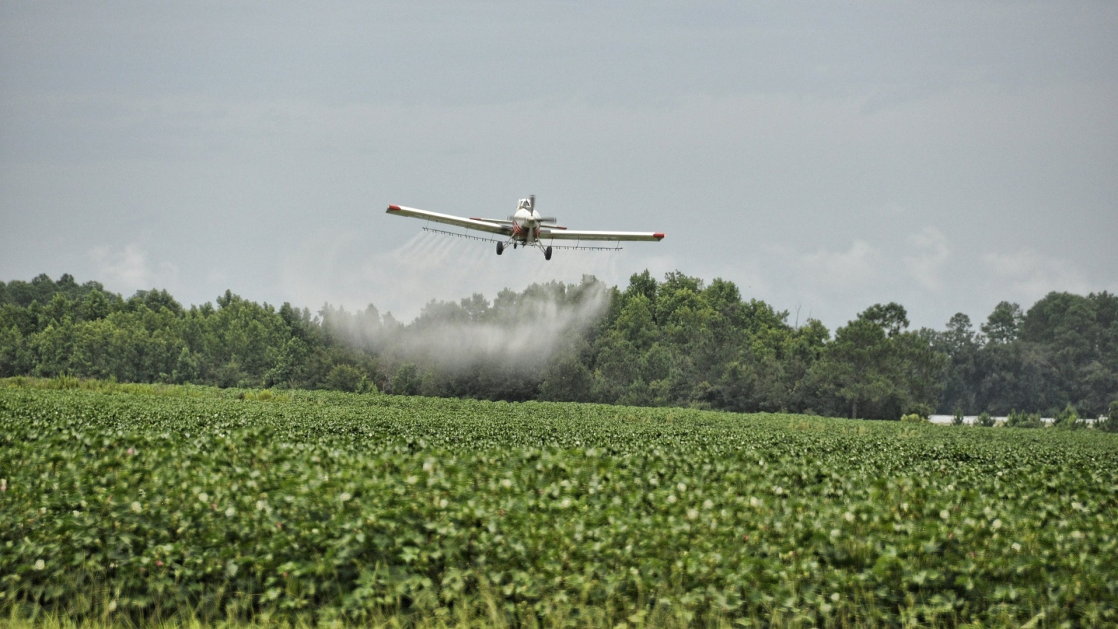 The Toxic Trail of Glyphosate – and The Organic Methods to Manage Weeds
