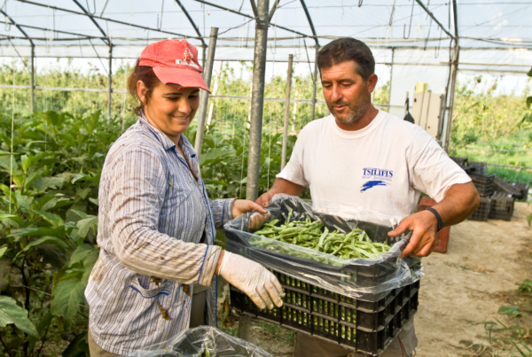 How supporting certification can help level the playing field for organic