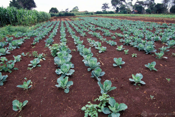 World Soil Day: How Organic can be a Solution to Soil Pollution