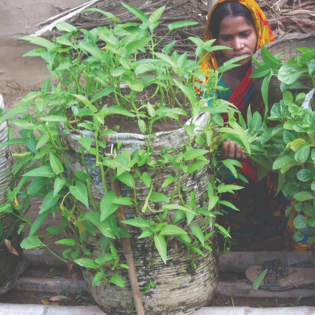 How Award Winning Sack Gardening Improved Nutrition Security