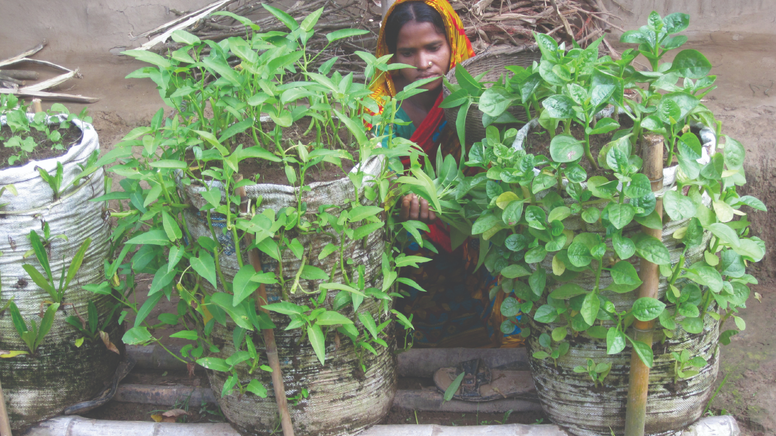 How Award-Winning Sack Gardening Improved Nutrition Security in Bangladesh