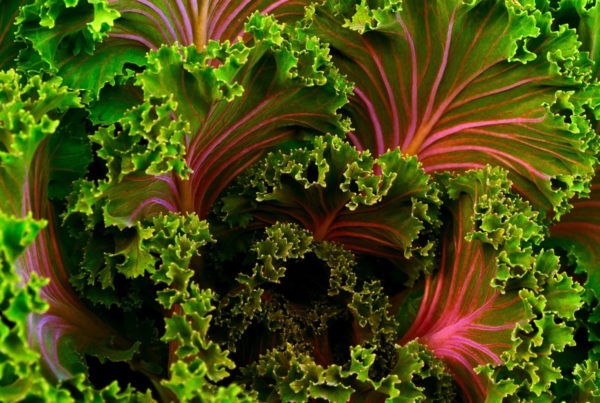 kale_avoid-dirty-dozen-chose-organic_Featured