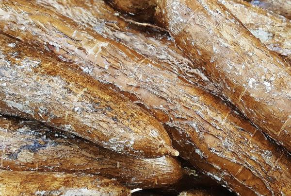cassava-tropics-bread