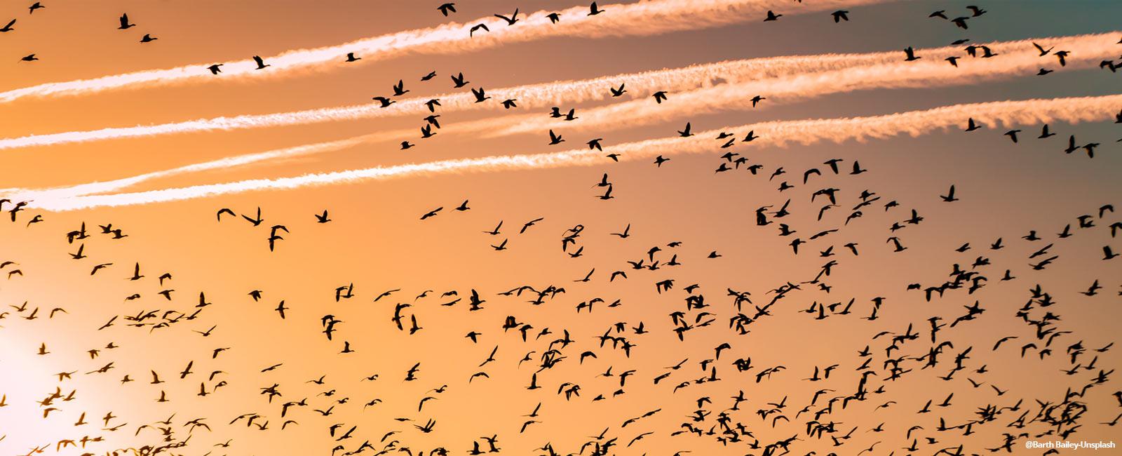 Migratory Birds: The Phenomenal Global Citizens
