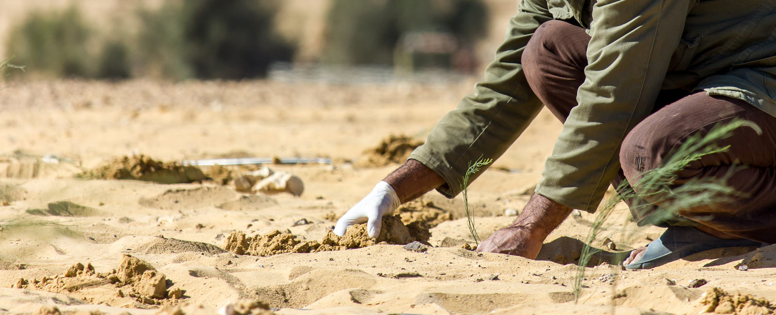 How we can tackle land degradation and desertification!