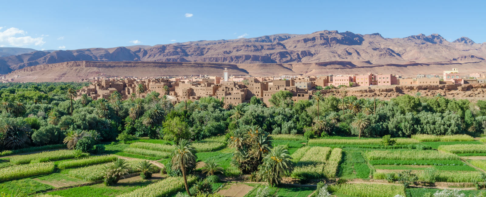 IFOAM – Organics International Supporting the Growth of Organic in Morocco