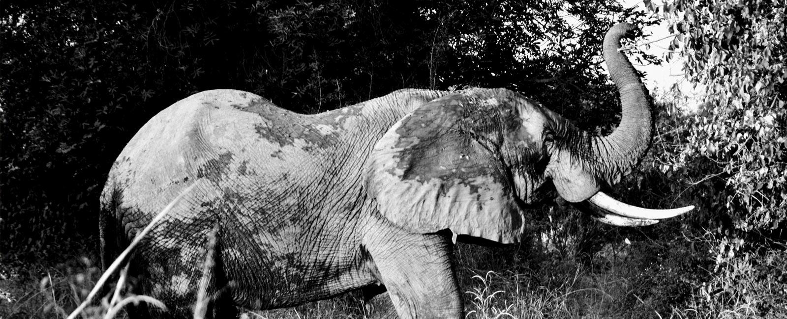 How Organic Farming Became an Alternative to Poaching!