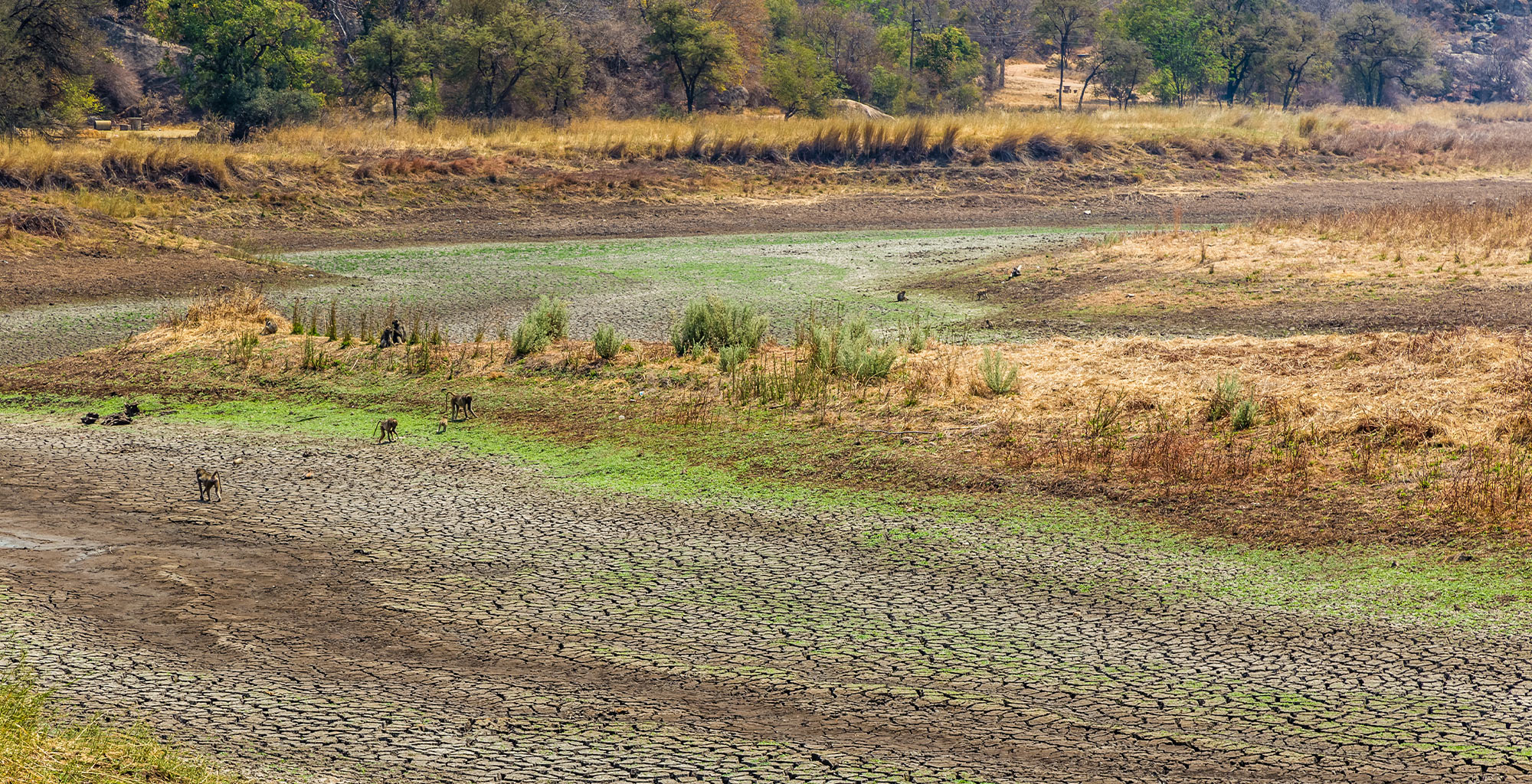 Zimbabwean Farmers Revive Stagnant Farms Through Agroecology