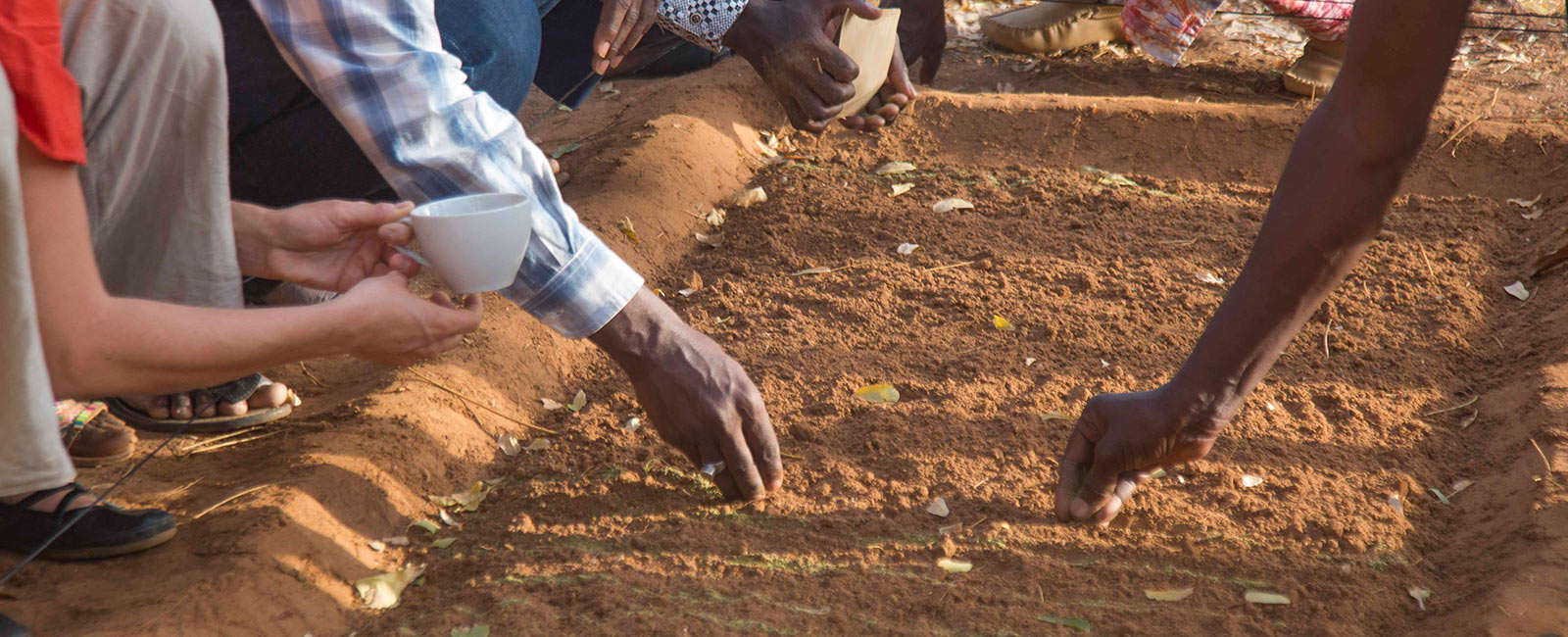 Using Organic Knowledge to Build Resilient Communities in Senegal and Mali
